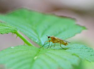 Fliege Kopie