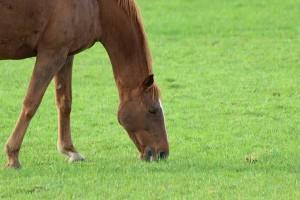 ...und noch ein Pferd